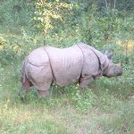 Chitwan National Park: A Park of One Horned Rhinoceros