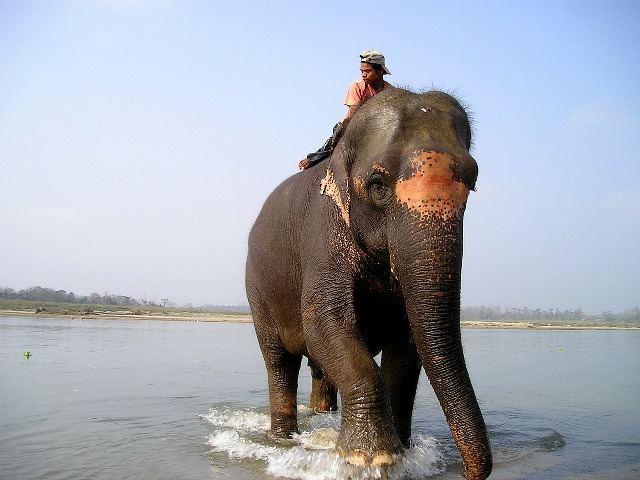 elephant ride safari national park - elephant Driver in Nepal