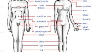 name of human body parts in Nepali english