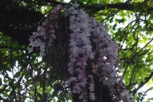New Year Flowers Amazing wonderful Flower in World Bloomed in Nepal (2)
