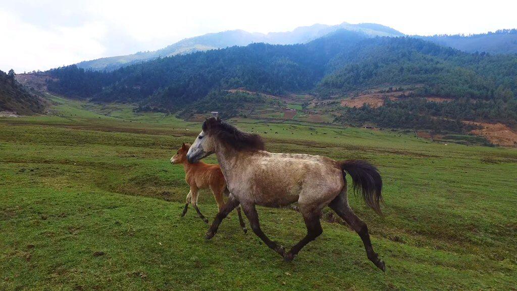Horses in DHORPATAN HUNTING RESERVE Nepal