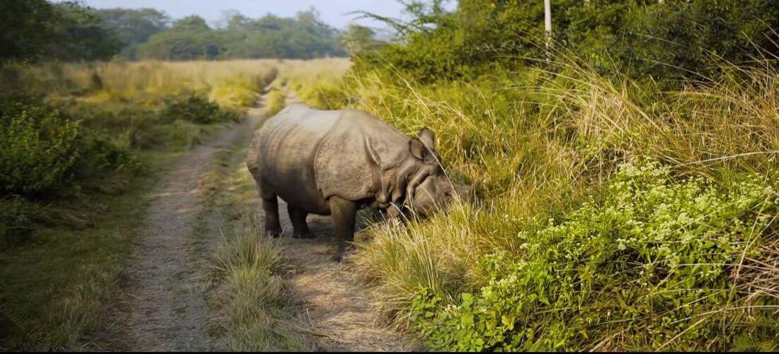 rhino Nepal national park chitwan