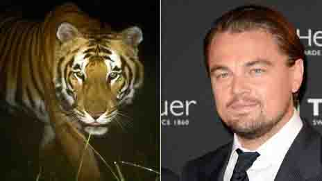 Leonardo DiCaprio Nepal's Interest : Donates $3 m to Save Tigers in Nepal