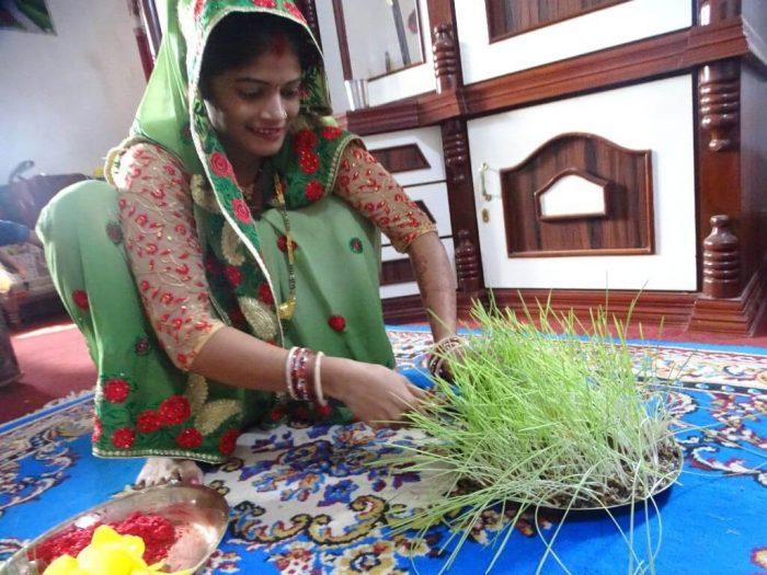 A Woman Cutting Jamara For Vijayadashami Tika Dashain