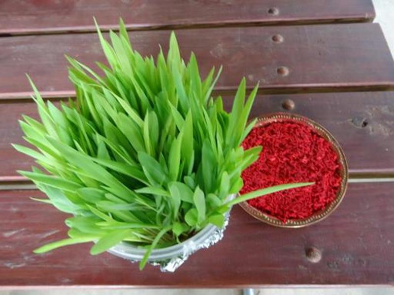 Dashain Jamara and Tika: Best 10 Photos of Jamara and Tika of Dashain Festival of Nepal