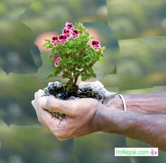 a flower plant world earth day in hands