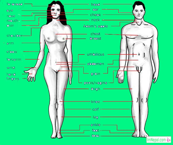 125 Name of Human Body Parts of Male and Female in English and Nepali with Picture