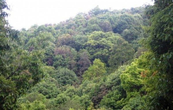 forests of Nepal photos pictures images classification types