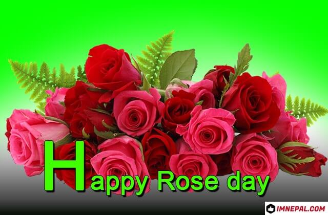 Happy Rose Day Greeting Cards