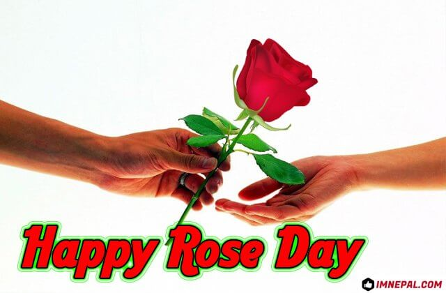 Happy Rose Day Greeting Cards Images