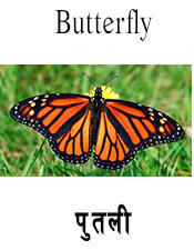 Butterfly - Insect name in English and Nepali