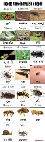 Insects Name in English and Nepali Image