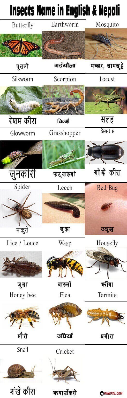 Name of 22 Worms And Insects in Nepali and English Language