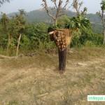 doko bhariya labour nepali boy profession agriculture