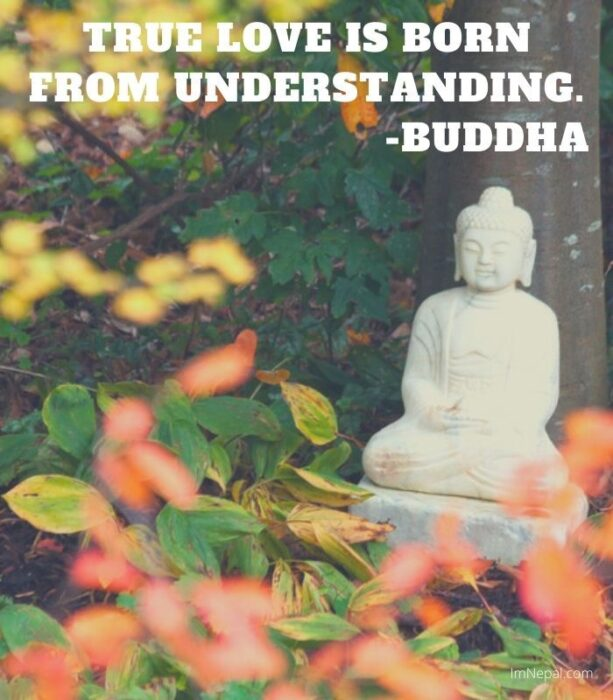 True love is born from understanding. Lord Buddha Quotes