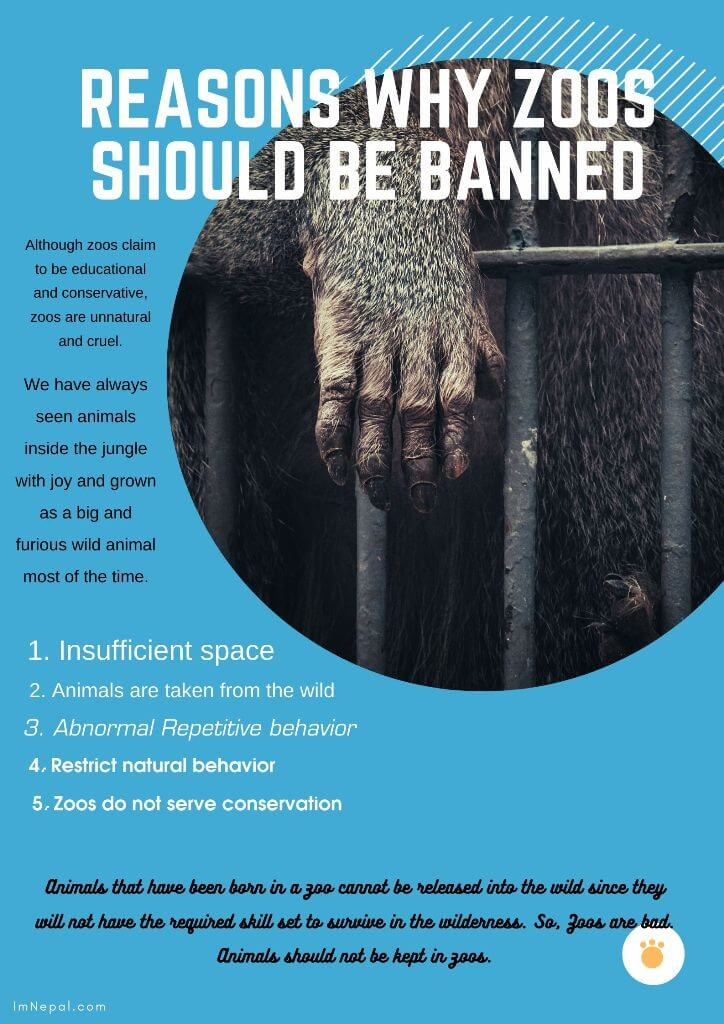 5 Reasons Why Zoos Are Bad – Zoo Should Be Banned And Animals Should Not Be Kept In Zoos
