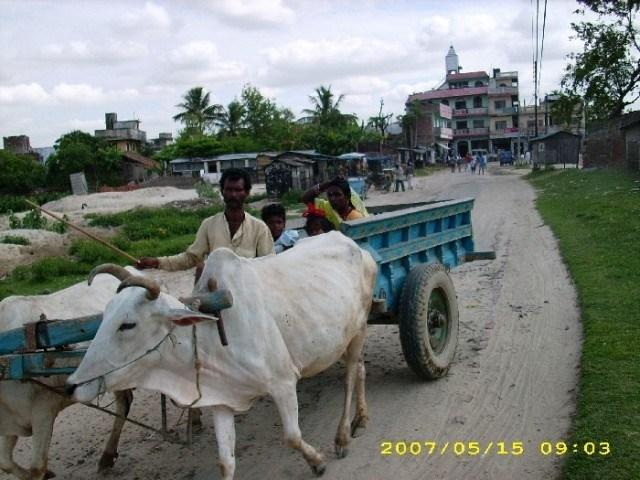 family ox goru gada transport in madhesh terai region of Nepal