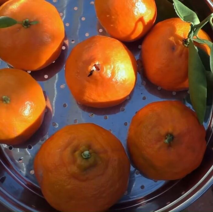 Tangerines Fruits
