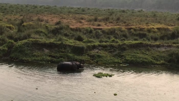 One horn rhino In Sauraha, Chitwan Nepal