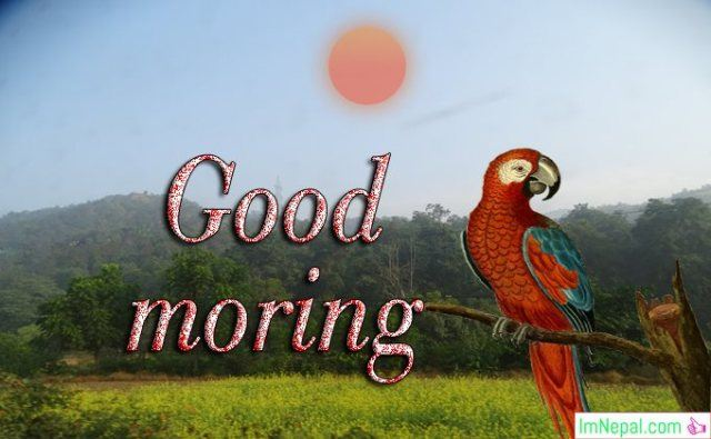 good morning greeting card images wallpapers picture photos pics wishes messages sms text quotes greetings ecards