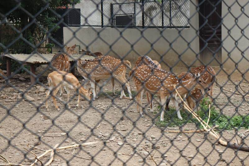 Zoo Kathmandu Nepal Photos Images Animal Pictures Travel Tours Holidays Deers