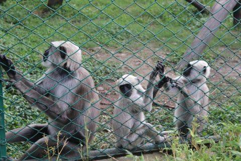 Zoo Kathmandu Nepal Photos Images Animal Pictures Travel Tours Holidays jungle pig