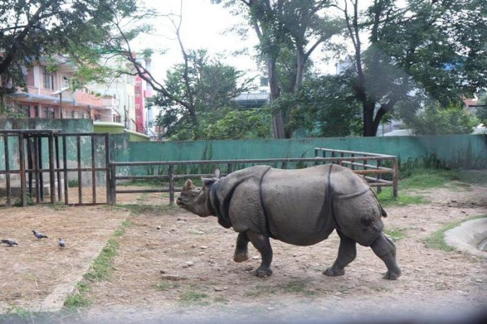 Zoo Kathmandu Nepal Photos Images Animal Pictures Travel Tours Holidays rhinoceros Nepal Holiday Tour