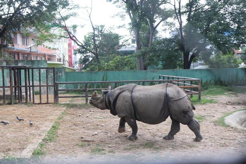 Zoo Kathmandu Nepal Photos Images Animal Pictures Travel Tours Holidays rhinoceros
