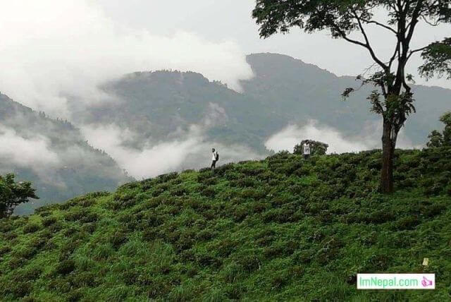 10 Reasons Why We Should To Visit Ilam, A Tea Garden of Nepal