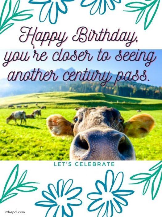 Funny Birthday Wishes Donkey