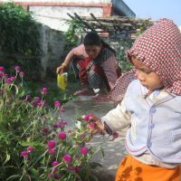 Plucking makhamali gomphrena globosa flower by kids