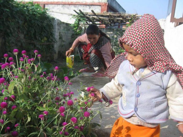 Plucking makhamali gomphrena globosa flower by kids