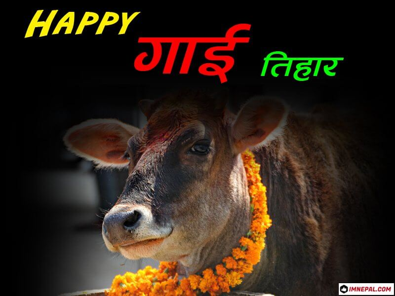 Happy Gai Tihar Greeting Card
