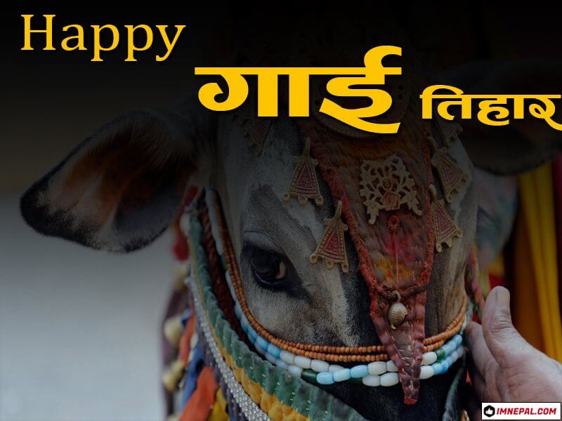 Happy Gai Tihar Cow Puja Nepal Greetings Cards Image