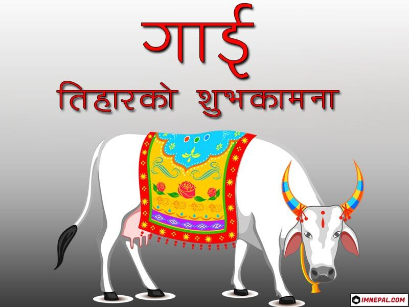 Happy Gai Tihar Cow Puja Nepal Greetings Cards Image Wallpapers