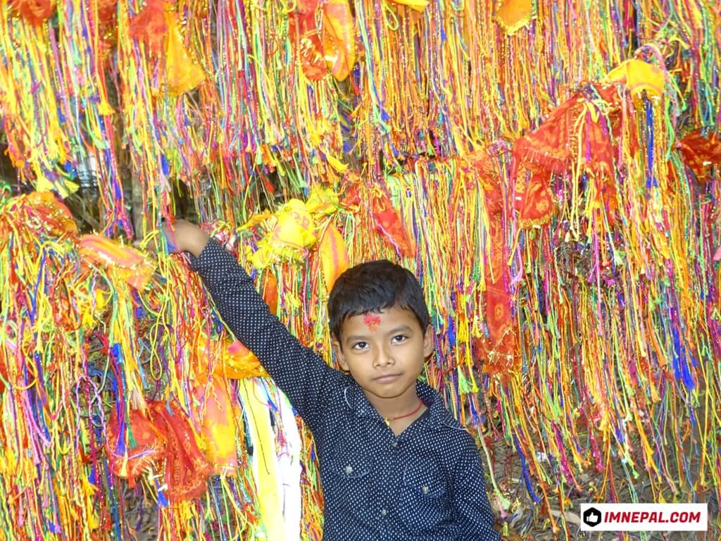 A boy is posing in front of thread in bamboo trees