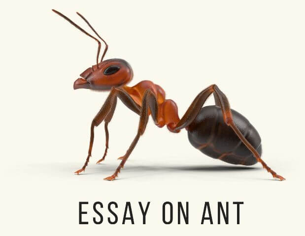 Essay on Ant For Kids Class & Students Of Schools & Colleges